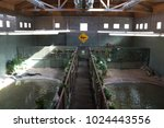 saltwater crocodile enclosure | Shutterstock . vector #1024443556