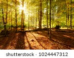 forest in autumn illuminated by ... | Shutterstock . vector #1024447312