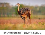 wildlife scene from brazil.... | Shutterstock . vector #1024451872