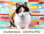 Tricolored Cat Is Sitting In A...