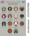 dogs by country of origin.... | Shutterstock .eps vector #1024542988