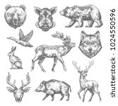 Wild animals sketch icons of grizzly bear, aper hog or boar and elk, rabbit hare or duck and wolf or deer. Vector isolated animals for hunting club, zoo wildlife or open season hunt adventure design | Shutterstock vector #1024550596