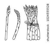 asparagus vector illustration.... | Shutterstock .eps vector #1024555528