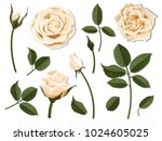 a set of flower parts.... | Shutterstock .eps vector #1024605025