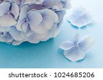 blue hydrangea flower on the... | Shutterstock . vector #1024685206