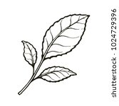 vector illustration. twig with... | Shutterstock .eps vector #1024729396