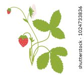 Strawberries Tree Vector...