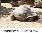 galapagos giant tortoise... | Shutterstock . vector #1024780762