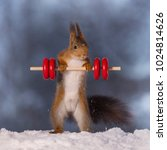 red squirrel is standing in the ... | Shutterstock . vector #1024814626