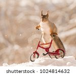 red squirrel is climbing on an... | Shutterstock . vector #1024814632