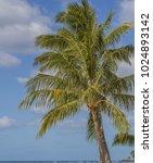 Small photo of Ala Moana Beach Palm Trees with a Blue and White Sky Backdrop.