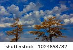 Fall Trees Against Blue Sky Tw...