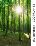 forest trees. nature green wood ... | Shutterstock . vector #1024914466
