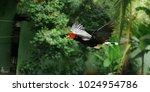beautiful horn bill bird | Shutterstock . vector #1024954786