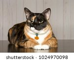 Calico Cat Laying On A...