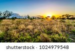 sunrise over the savanna and... | Shutterstock . vector #1024979548