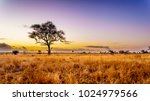 sunrise over the savanna and... | Shutterstock . vector #1024979566