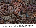 Dried Lotus Pods Create A...