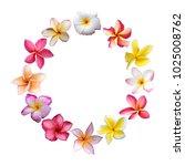plumeria wreath  plumeria frame ... | Shutterstock . vector #1025008762