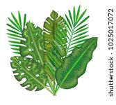 tropical and exotic palms leafs | Shutterstock .eps vector #1025017072