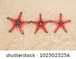 red starfish on white sand on... | Shutterstock . vector #1025025256