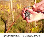 farmer check quality of frozen... | Shutterstock . vector #1025025976