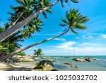 royalty high quality free stock ... | Shutterstock . vector #1025032702