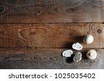 fresh white mushrooms...   Shutterstock . vector #1025035402