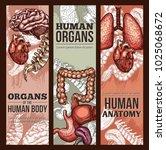 human organs anatomy medical...   Shutterstock .eps vector #1025068672