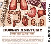 human anatomy medical poster of ...   Shutterstock .eps vector #1025070622