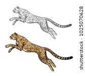 cheetah wild african animal... | Shutterstock .eps vector #1025070628