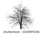autumn tree silhouette | Shutterstock . vector #1025095246
