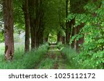 walkway of tall old green trees ... | Shutterstock . vector #1025112172