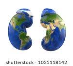 human kidneys with world map.... | Shutterstock . vector #1025118142