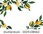 hand drawn watercolor lemon... | Shutterstock . vector #1025138062