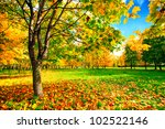 Autumn Landscape With Colourfu...