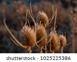 frozen flora in winter | Shutterstock . vector #1025225386