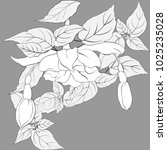 vector image. fuchsia.... | Shutterstock .eps vector #1025235028