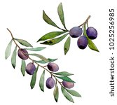 olive tree in a watercolor...   Shutterstock . vector #1025256985