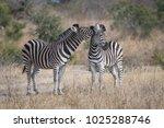 a horizontal  full length ... | Shutterstock . vector #1025288746