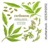 cardamom elements set   Shutterstock .eps vector #1025292052