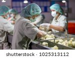 baby chicken  poultry business. ...   Shutterstock . vector #1025313112