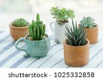 Various types of mini cactus...