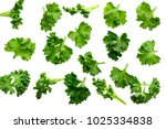 soft focus of green bio parsley ... | Shutterstock . vector #1025334838
