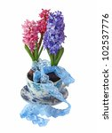Hyacinths in a beautiful pot with a lace ribbon  on a white background - stock photo