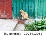 portrait of red cat | Shutterstock . vector #1025413066