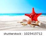beautiful sea shells on the... | Shutterstock . vector #1025415712