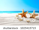 beautiful sea shells on the... | Shutterstock . vector #1025415715