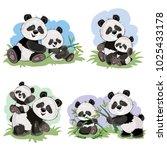 cute baby panda bear and its...   Shutterstock .eps vector #1025433178