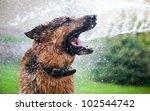 Washing The Dog With Fun